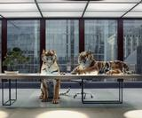 MPC creates CG crowds, tigers and planes for Virgin Atlantic's The Idea