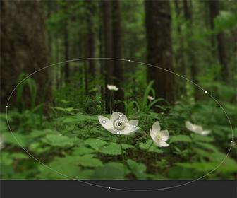 Add a blur to a video using Photoshop CS6.1